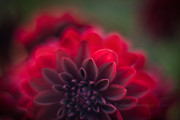 Poetic Tapestries Textiles - Rouge Dahlia by Mike Reid