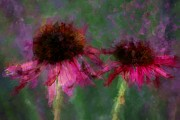 Alicegipsonphotographs Art - Rouged Floral by Alice Gipson