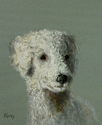 Ann Radley - Rough and Ready Poodle