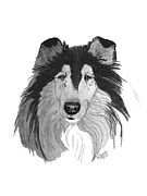 Collie Drawings Posters - Rough Collie headstudy Poster by Virginia Cleary
