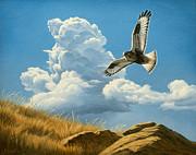 Rough-legged Hawk Print by Paul Krapf