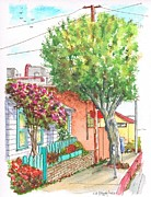 Picket Fence Originals - Round tree and bougainvilleas in Laguna Beach - California by Carlos G Groppa