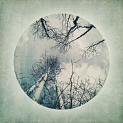 Birch Tree Metal Prints - round treetops II Metal Print by Priska Wettstein