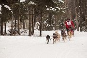 Dog Sled Posters - Rounding a Corner Poster by Tim Grams