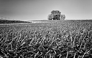 Cornfield Photos - Route 91 Barn by Jeff Burton