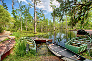 Dan Carmichael - Row Boats in Cypress...