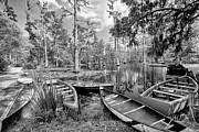 Row Boats In Cypress Tree Swamp IIi Print by Dan Carmichael