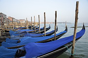 Venice Waterway Posters - Row of empty moored gondolas Poster by Sami Sarkis