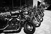 Sportster Photos - Row Of Harley Davidson Motorbikes Including Sportster Outside Motorcycle Dealership Orlando Florida  by Joe Fox