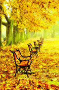 Autumn Scene Digital Art - Row of red benches in the park by Jaroslaw Grudzinski