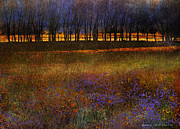 R christopher Vest - Row Of Trees And Meadow