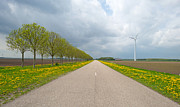 Field Of Dandelions Posters - Row of trees with blooming dandelions along a road Poster by Jan Marijs