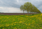 Field Of Dandelions Posters - Row of trees with blooming dandelions Poster by Jan Marijs