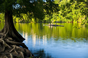 Austin Photo Prints - Rowing past Red Bud Island Print by Mark Weaver