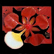 Stainless Steel Mixed Media Metal Prints - Royal Poinciana Bloom Set in a Bed of Petals Metal Print by Diane Snider
