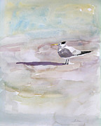 Julianne Felton - Royal Tern