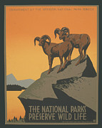 National Park Service Prints - Rreserve Wildlife Print by Unknown