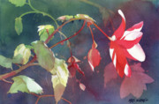 Translucent Paintings - Ruby Begonia by Kris Parins