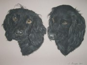 English Cocker Spaniel Posters - Ruby Poster by Joanne Simpson