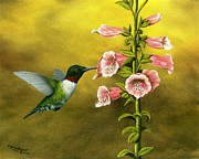 Foxglove Flowers Painting Framed Prints - Ruby Throated Hummingbird and Foxglove Framed Print by Rick Bainbridge