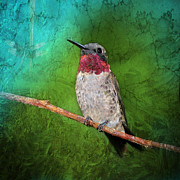 Oklahoma Digital Art Posters - Ruby Throated Hummingbird Poster by Betty LaRue