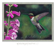 Hummingbird Pastels Framed Prints - Ruby Throated Hummingbird Framed Print by Michael  Weber