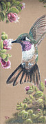 Hardy Drawings - Ruby Throated Hummingbird by Pris Hardy