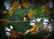Terri K Designs - Ruby throated hummingbird