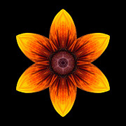 Rudbeckia I Flower Mandala Print by David J Bookbinder