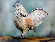 Jean Yves Crispo - Ruffed grouse