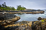 Vancouver Island Framed Prints - Rugged coast of Pacific ocean on Vancouver Island Framed Print by Elena Elisseeva