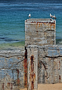 Ruins At Monterey Bay Print by Susan Wiedmann
