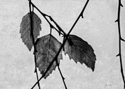 Leaf Photo Prints - Rule Of Three Print by Bob Orsillo