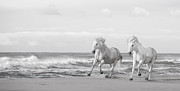 Canter Photos - Run White Horses VI by Tim Booth