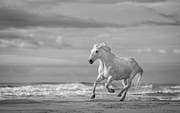 Mammals Photos - Run White Horses VIII by Tim Booth