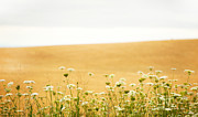Artist and Photographer Laura Wrede - Run With Me Through a Field of Wild Flowers