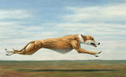 Greyhound Metal Prints - Running Free Metal Print by James W Johnson