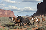 Horse Herd Photo Prints - Running Free Print by Sandra Bronstein