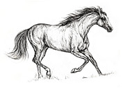 Horse Drawing Framed Prints - Running  Horse 08 10 2013 Framed Print by Angel  Tarantella