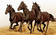 """Предпросмотр схемы вышивки  """"Бегущие лошади """"."""