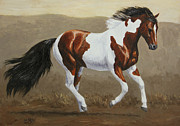 Wild Horse Metal Prints - Running Pinto Mustang Metal Print by Crista Forest