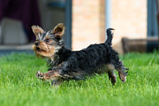 Andrew  Michael - Running Puppy