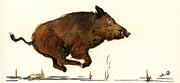 Wild Boar Paintings - Running wildboar by Juan  Bosco