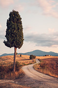 Tuscan Sunset Posters - Rural road with cypress tree in Tuscany Italy Poster by Matteo Colombo