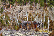 Photography Prints Prints - Rural Rustic Rundown Rocky Mountain Cabin Print by James Bo Insogna