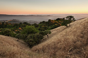 Bay Area Photo Framed Prints - Russian Ridge in Summer Framed Print by Matt Tilghman