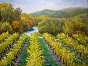 Sonoma County Originals - Russian River Vineyard by David  Walker