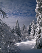 Large Format Prints - Russian Winter Forest in Mountain Print by Efim Chernov