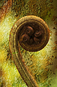 My Sold Prints - Rust and Fern by Heiko Koehrer-Wagner