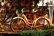 Sarah Yost - Rusted Bicycle and...